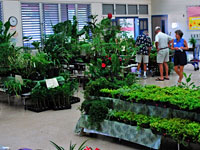 Annual Plant Sale at Waikoloa Elementary School